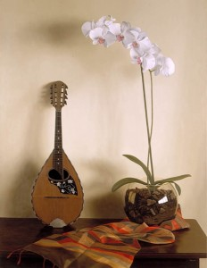 Orchid and Mandolin